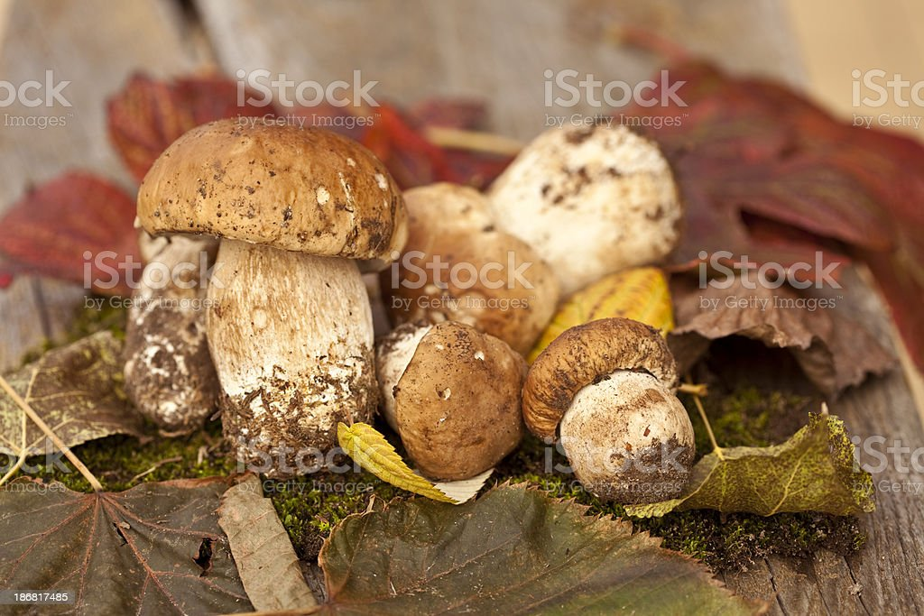 porcini royalty-free stock photo