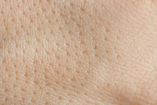 pores on human skin stock photo