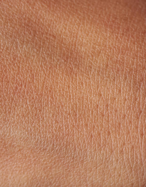 Pores on human skin Pores and lines on human dark brown girl skin closeup human skin stock pictures, royalty-free photos & images