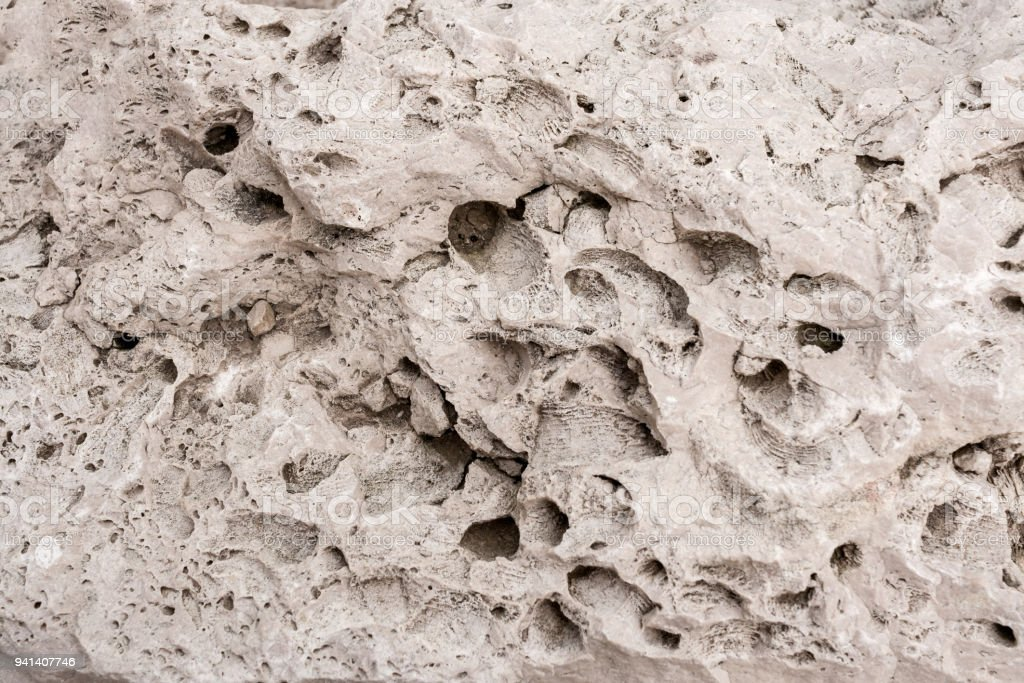 Porous rock with holes and prints of sea shells. stock photo