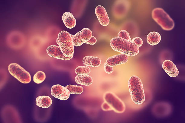 Porphyromonas gingivalis bacteria stock photo