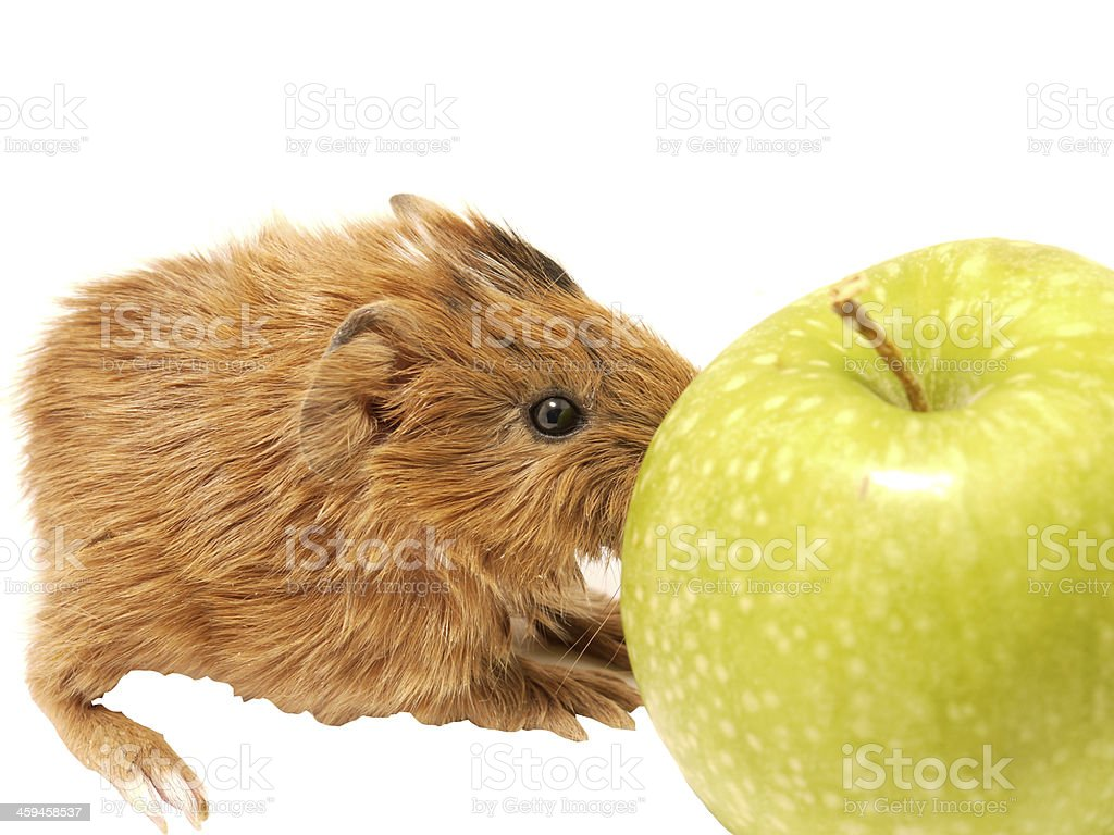 Porpoise and an apple royalty-free stock photo