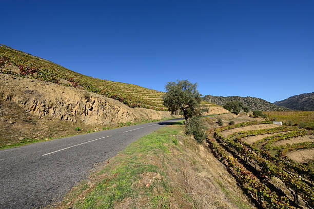 Port vineyards in Autumn stock photo
