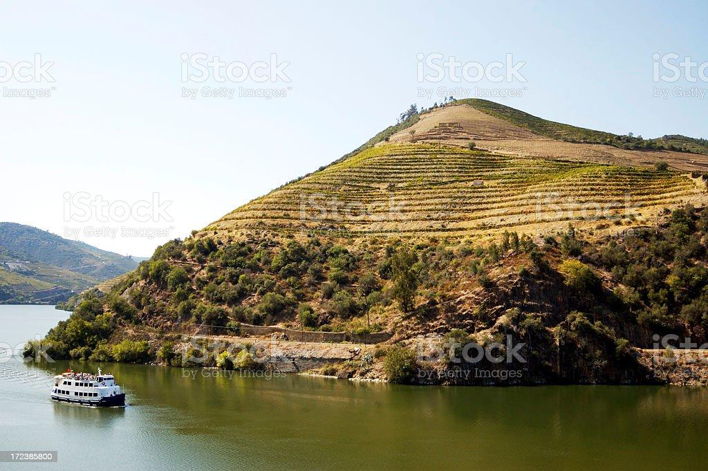 Port wine vineyards stock photo