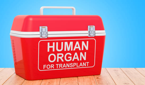 Portable fridge for transporting donor organs on the wooden table, 3D rendering stock photo