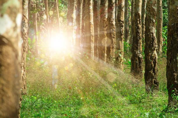 Portal da floresta para outra dimensão onde criaturas desconhecidas, como o dogman e bigfoot podem entrar de outro reino.  Fenômenos inexplicáveis com espaço de cópia. - foto de acervo