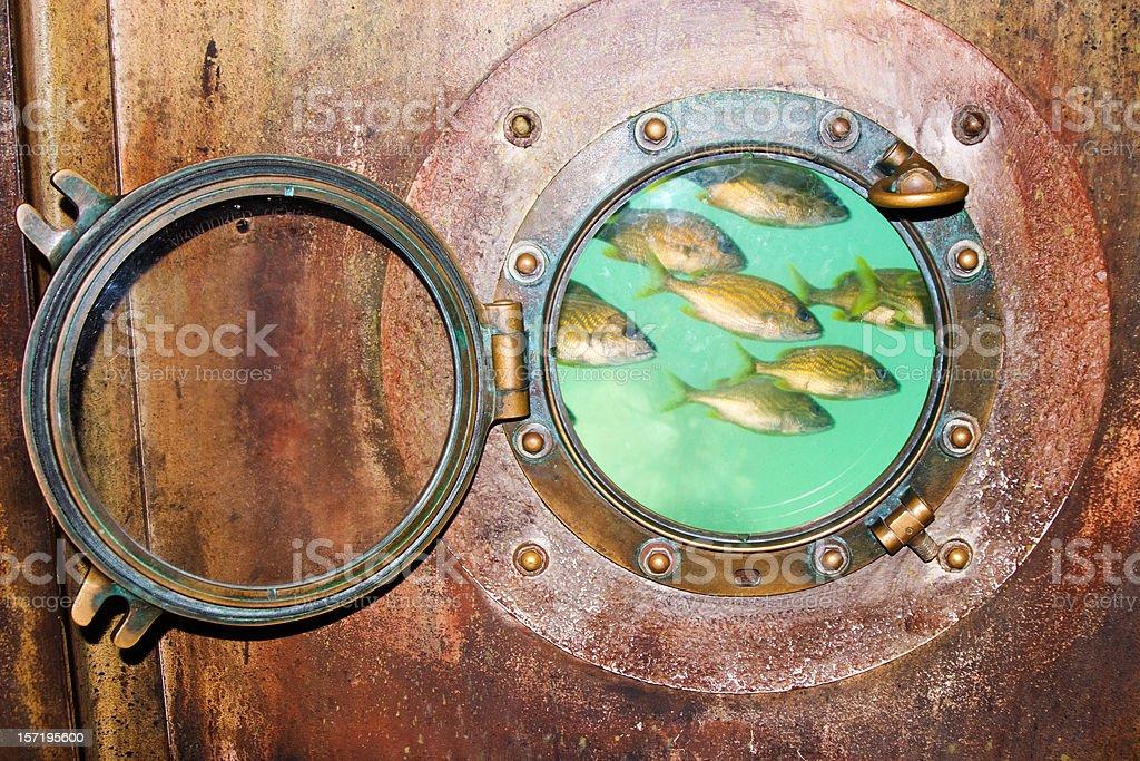 Porthole School of Fish royalty-free stock photo