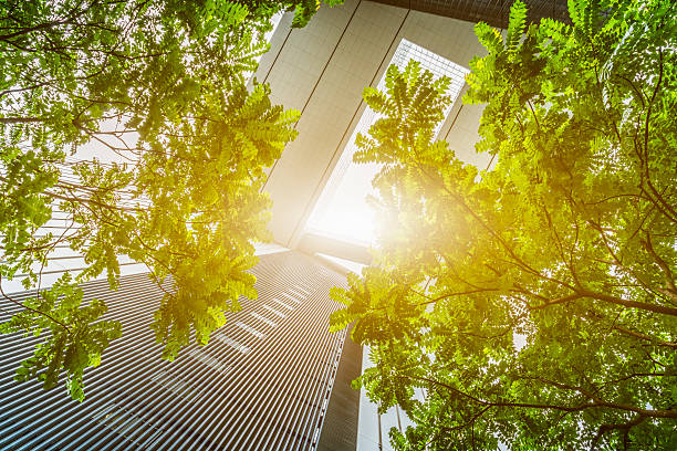 portion of trees against office buildings stock photo