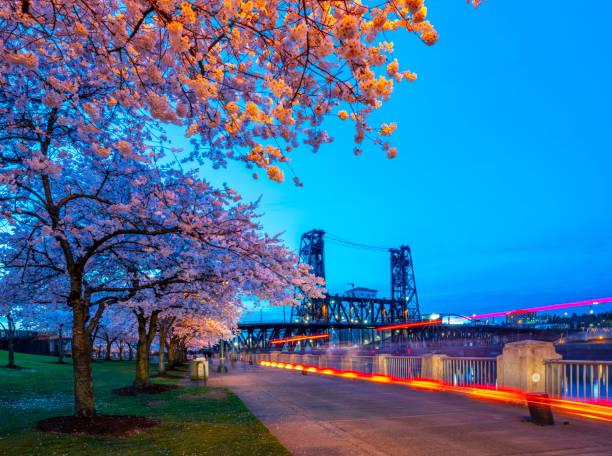 Portland Kirschblüte Waterfront. – Foto