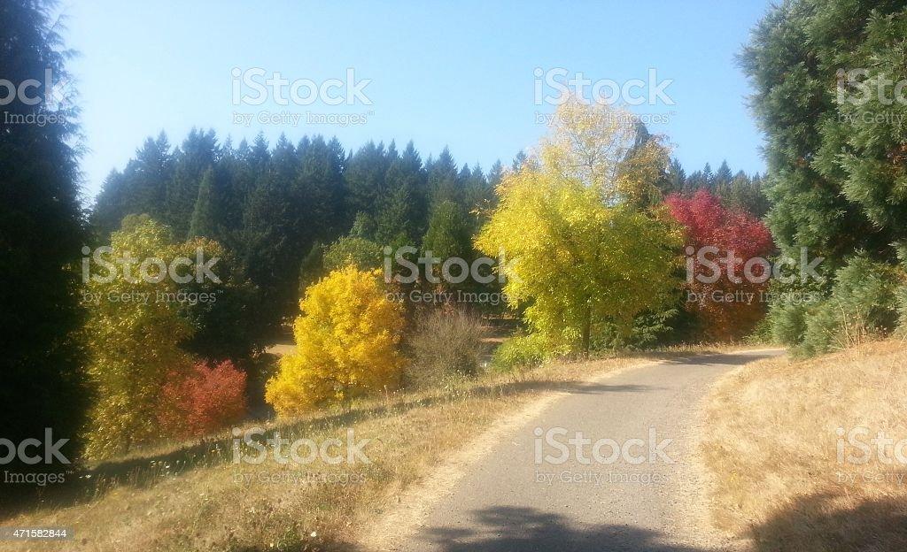 Portland Hoyt Arboretum stock photo