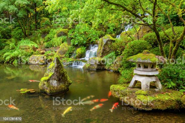 Portland japanese garden pond with koi fish carp picture id1041281870?b=1&k=6&m=1041281870&s=612x612&h=zuyp f 46qz ys pmgqngg5unle5lga8p0hnsrplifo=