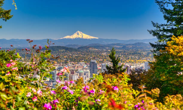 Portland Oregon skyline with Mt. Hood in Autumn Aerial view of Portland, Oregon take in Autumn mt hood stock pictures, royalty-free photos & images