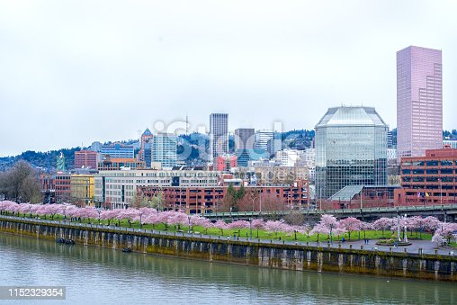 Spring season in Portland Oregon waterfront cherry blossoms blooming