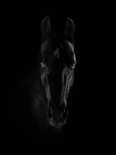Portret czarny Akhal-Teke konia z niebieskie oczy na czarnym tle – zdjęcie