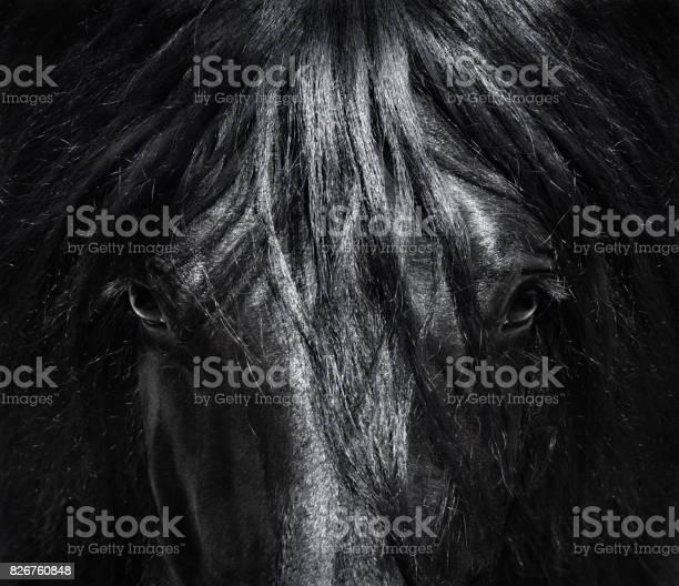 Portrait close up spanish purebred horse with long mane blackandwhite picture id826760848?b=1&k=6&m=826760848&s=612x612&h=8lemi6hbi0xdisigzemmb7rm obucs2z 8 ha5poq2o=