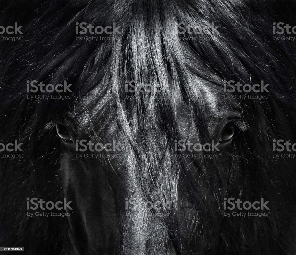 Portrait close up Spanish purebred horse with long mane. Black-and-White photo. stock photo
