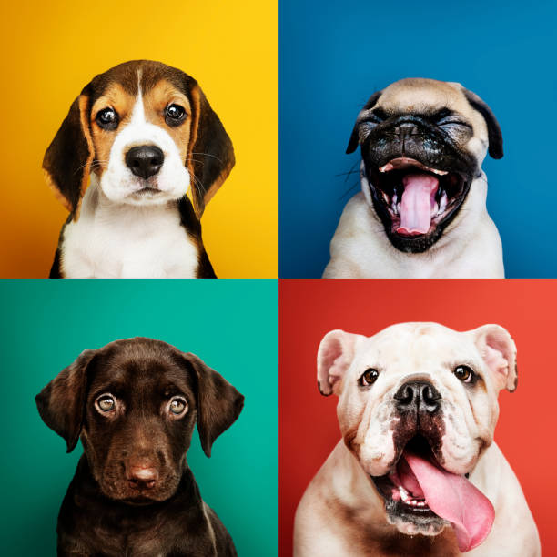Portrait collection of adorable puppies stock photo