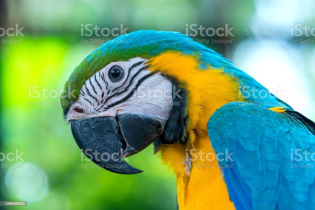 Porträt bunte Ara Papagei auf einem Ast. – Foto