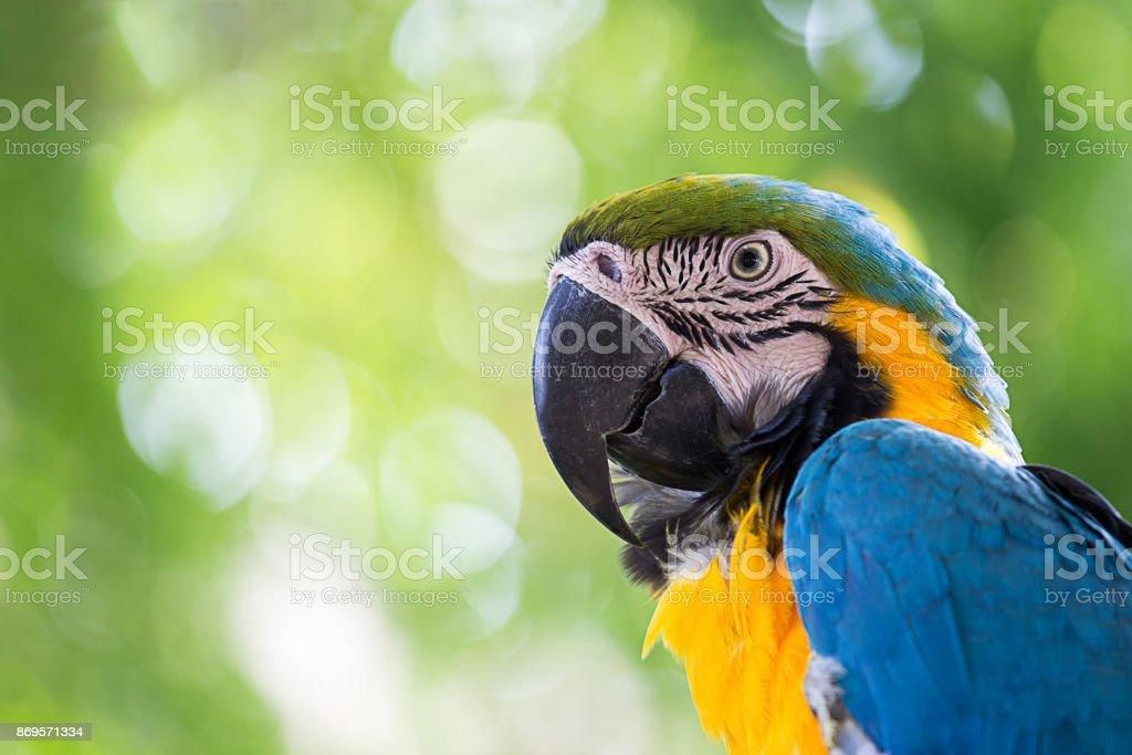 Porträt-bunte Ara-Papagei – Foto