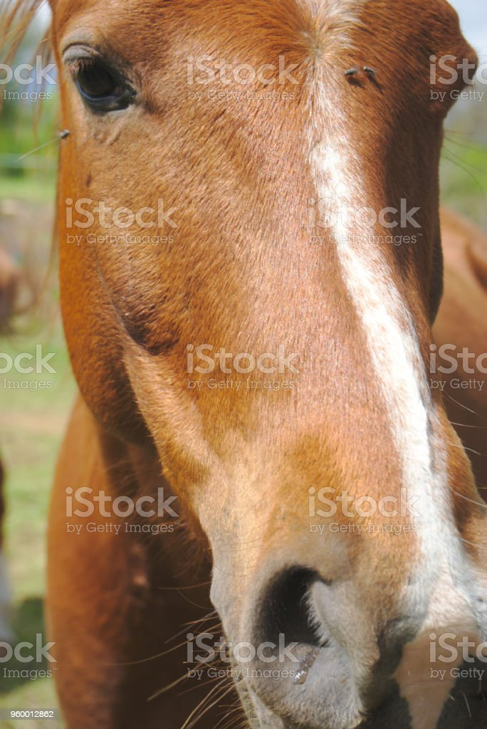portrait de cheval bai stock photo