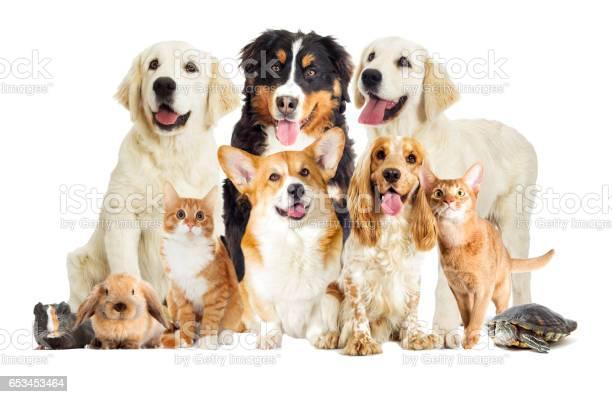 Portrait dogs and kitten picture id653453464?b=1&k=6&m=653453464&s=612x612&h=nwbhx3mggbkpwnbneo9tgdvq33jzakwjgk2xd7cddlo=