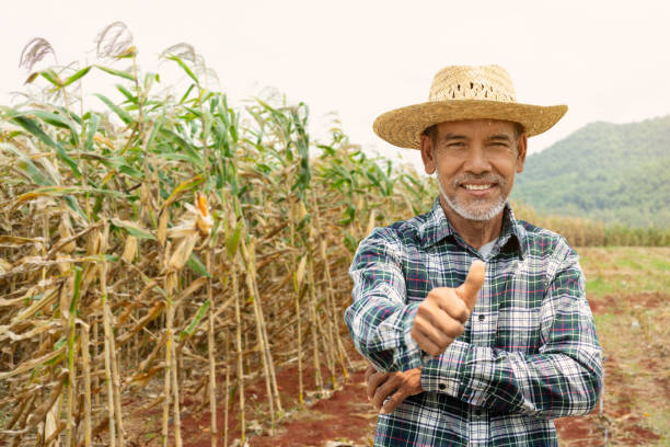 portrait happy mature older man is smiling. old senior farmer with white beard thumb up feeling confident. elderly asian man standing in a shirt and looking at camera at corn field in sunny day. - homem chapéu imagens e fotografias de stock