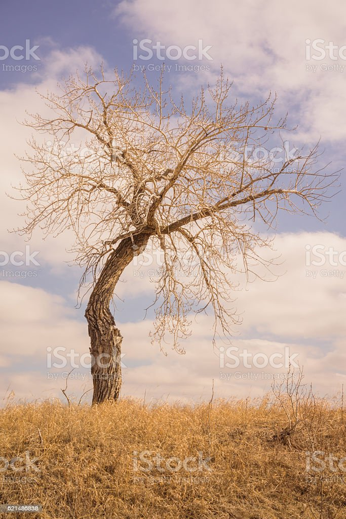 Portrait Landscape of a Bent Tree in the Grassland foto stock royalty-free