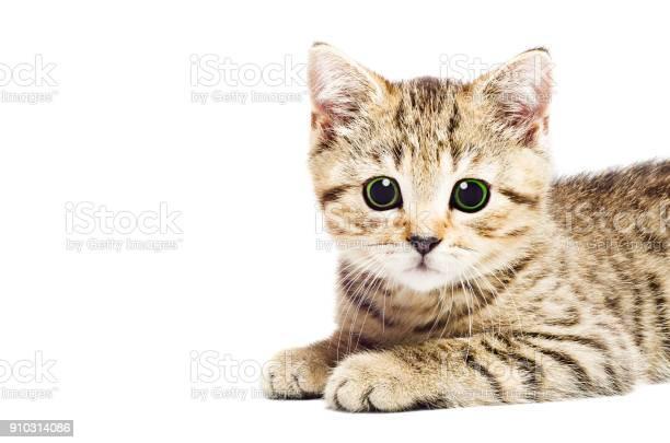 Portrait of a attractive kitten closeup picture id910314086?b=1&k=6&m=910314086&s=612x612&h=quzo8eevcwhfqh2uvpj9ymcqbavtwenkx5myfobm8q8=