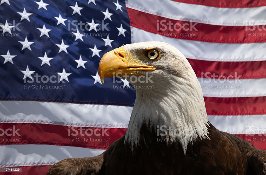 Portrait of a bald eagle in front of an American Flag stock photo