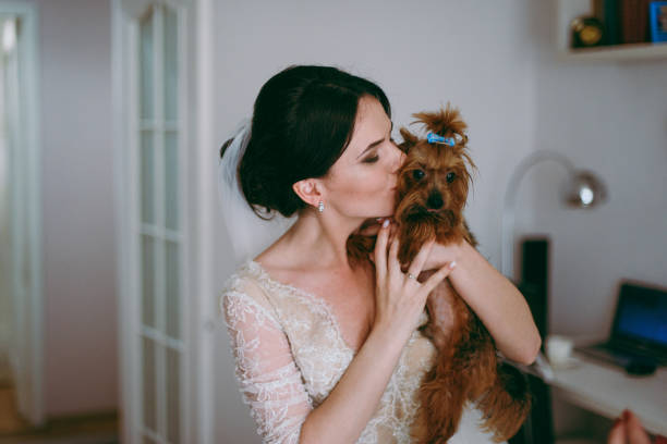 Portrait of a beautiful bride on wedding day. The bride is kissing the dog. stock photo