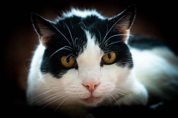 portrait of a beautiful cat stock photo