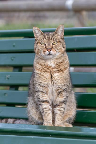 Porträt einer schönen Katze auf einer Bank – Foto