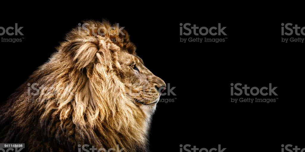 Portrait d'un beau lion, chat dans le profil de lion en noir - Photo