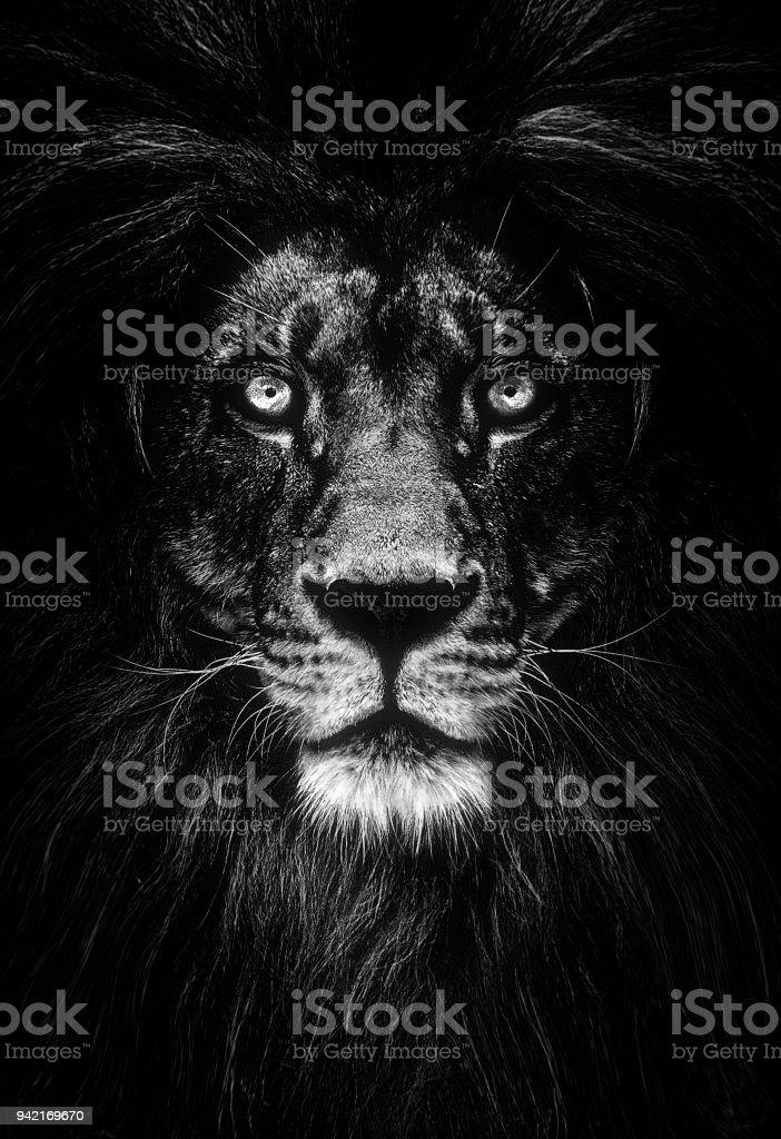 Retrato de un hermoso León, León en oscuridad - foto de stock