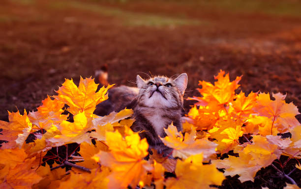 Portrait of a beautiful striped kitten playing in the park among the picture id1055175584?b=1&k=6&m=1055175584&s=612x612&w=0&h=plavzu0sdw4xr9rpgb0niq6wr7zm iv03kpml zpd9i=
