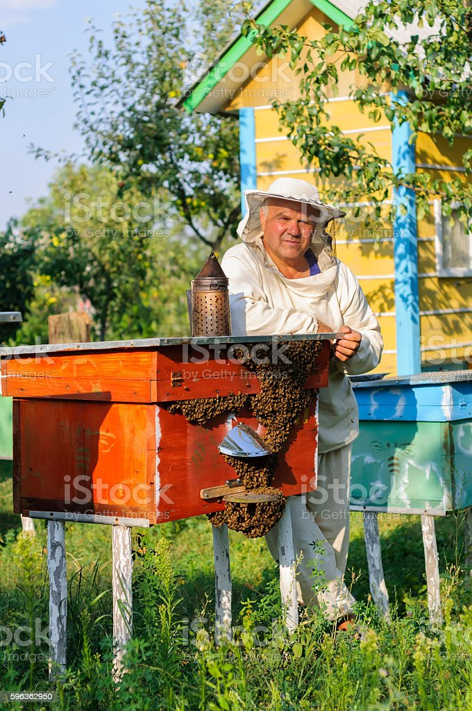portrait of a beekeeper on apiary at hive with bees royalty-free stock photo
