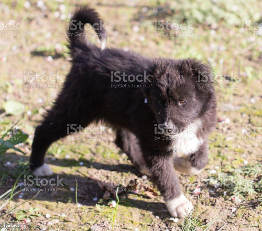 portrait of a black puppy stock photo