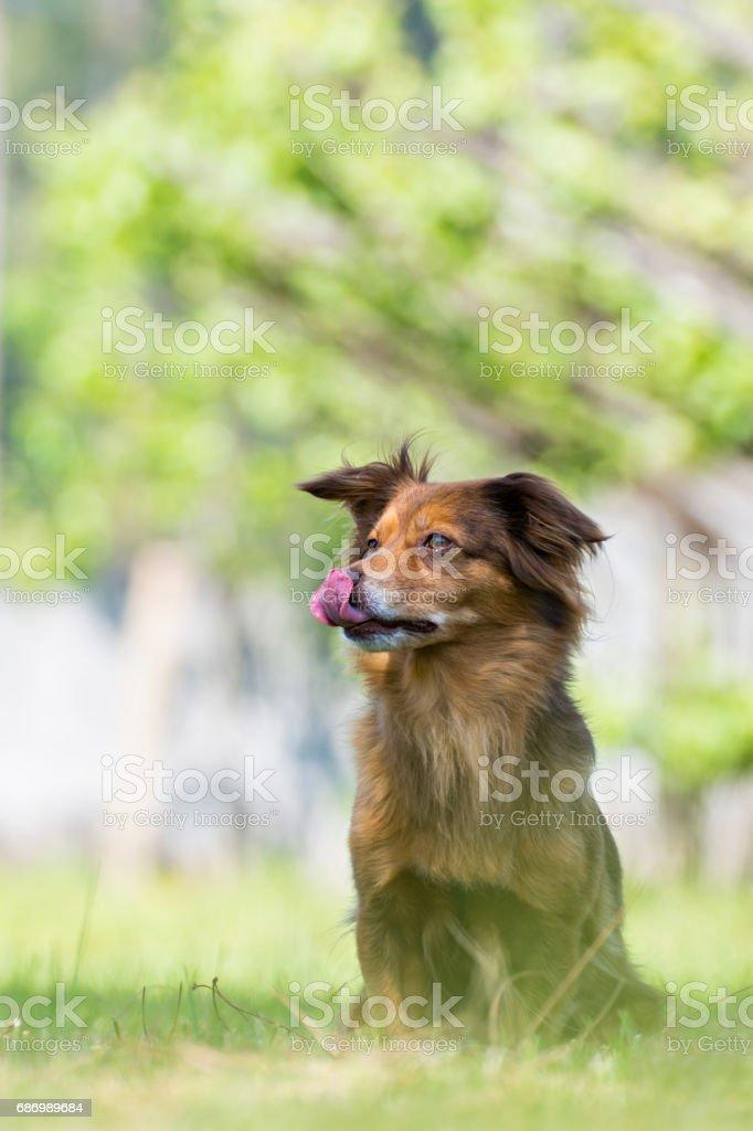 Portrait of a brown dog Lizenzfreies stock-foto