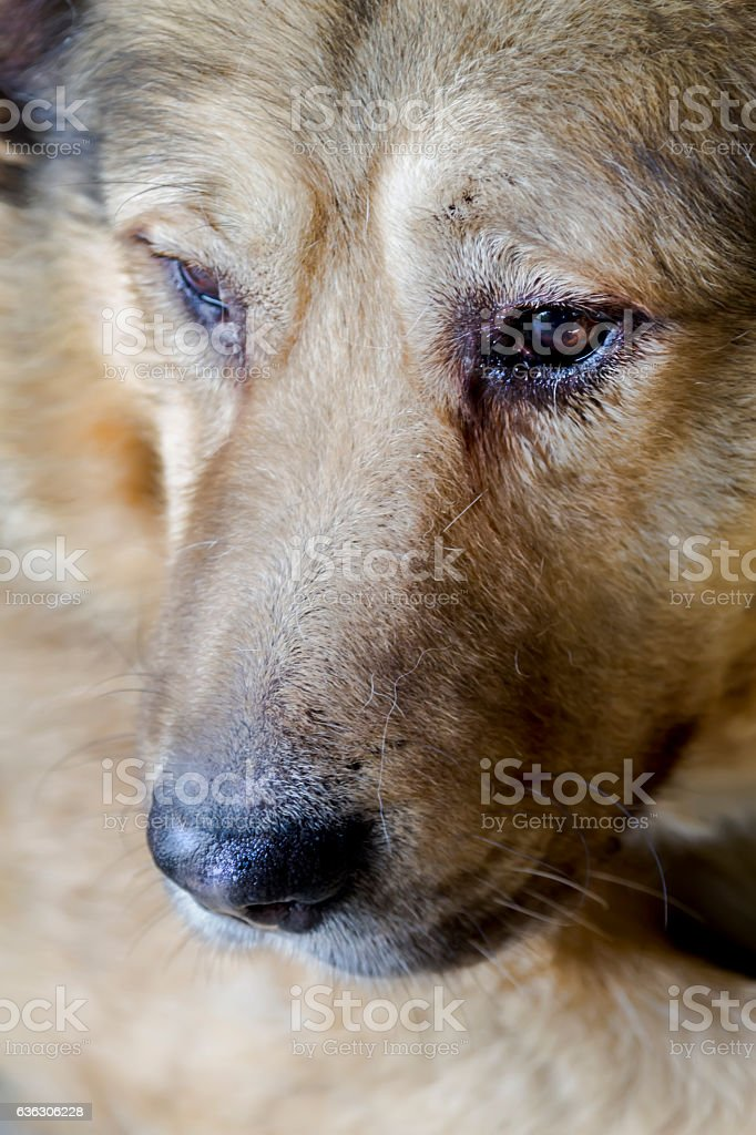 Portrait of a brown dog. Soft focus stock photo