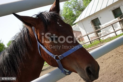 istock Portrait of a brown running horse on a farm 678151290