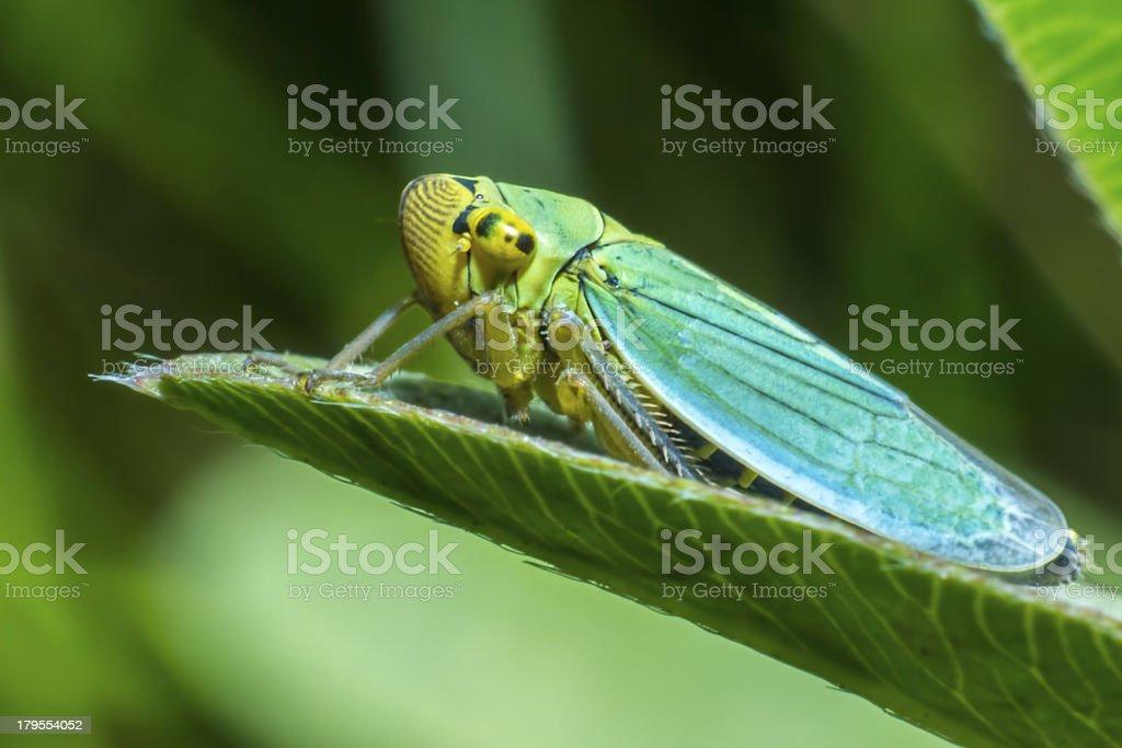 Portrait of a bug stock photo