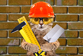 Portrait of a builder cat with tools in paws on background brick wall