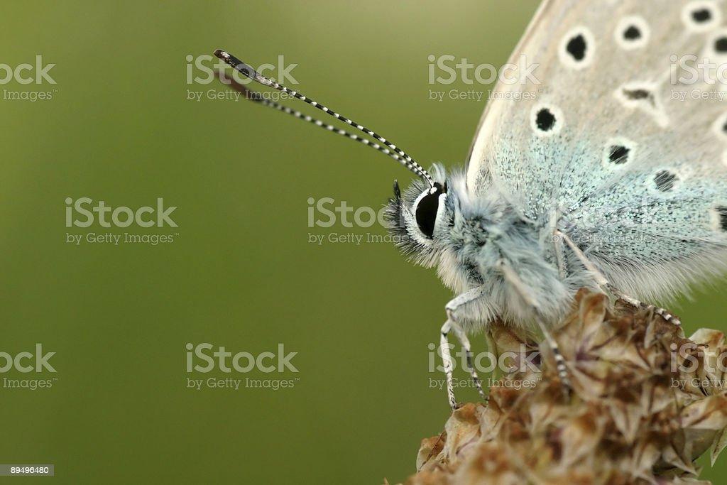 Ritratto di una farfalla foto stock royalty-free