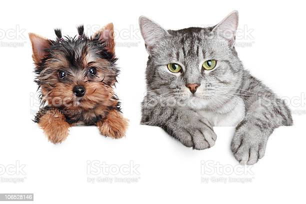 Portrait of a cat and dog isolated on white background picture id106528146?b=1&k=6&m=106528146&s=612x612&h=uh8qjdr9jvjaufil93qop6g86vcqv5ize2mn3hju4vm=