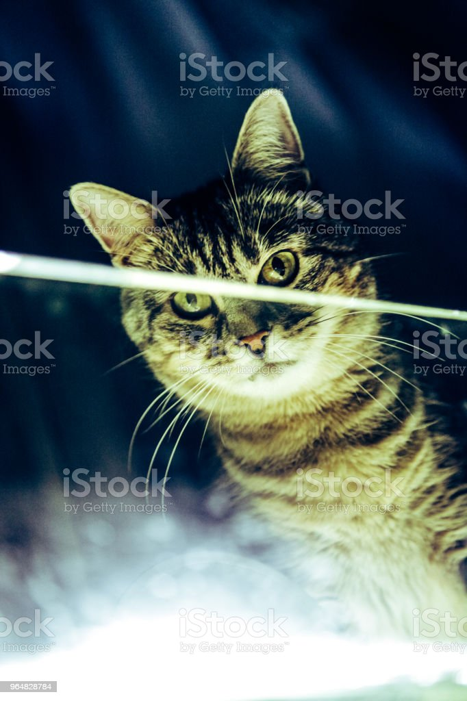 Portrait of a cat on a dark background royalty-free stock photo