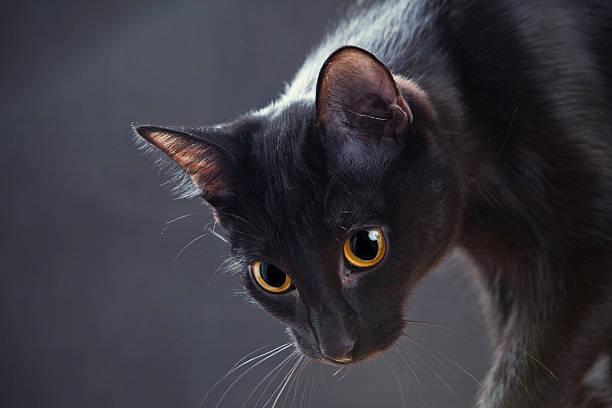Porträt einer Katze – Foto