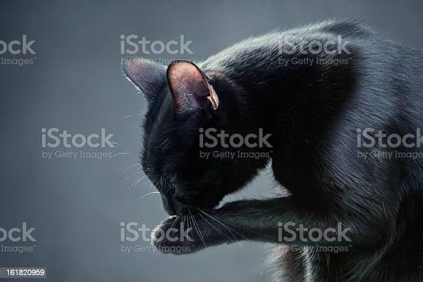 Portrait of a cat picture id161820959?b=1&k=6&m=161820959&s=612x612&h=y5lbrgw5rswso8qmc e2o8jgaxzxwd5cmazumxo0s3q=