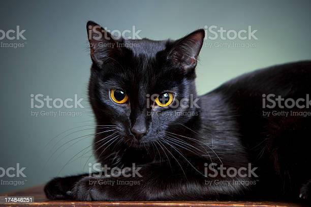 Portrait of a cat picture id174846251?b=1&k=6&m=174846251&s=612x612&h=36j7qt9lyhqpjdfnf2ledrfn3 xtlrmukuywrddmfi0=