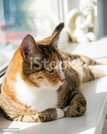 Portrait Of A Cat Stock Photo & More Pictures of Animal