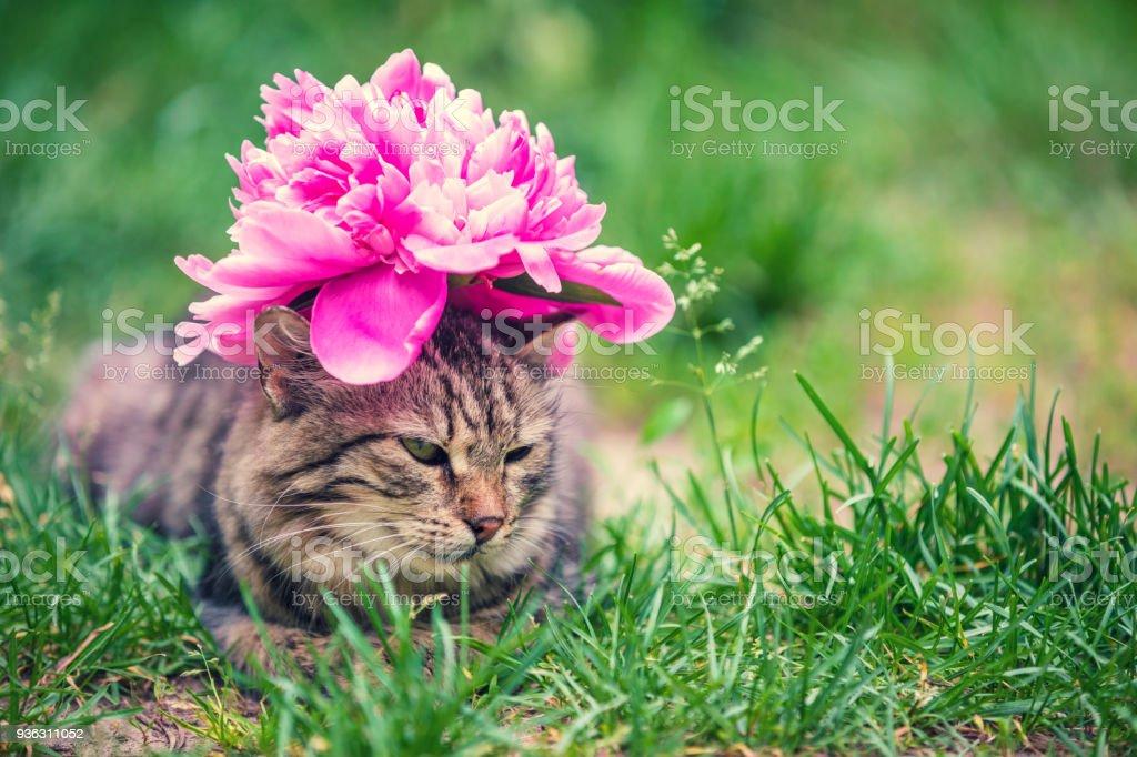 Porträt einer Katze mit einer Pfingstrose Blume auf ihrem Kopf liegen auf der Wiese im Garten im Sommer – Foto